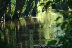 Fregment_rzeki_Czernica