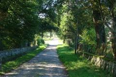 Droga_w_kierunku_palacu