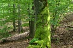 Piekno_przyrody_rzeczenickiej