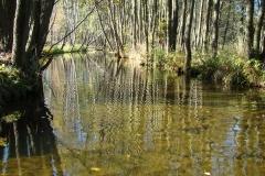 Rzeka_Biala_w_okolicach_Miedzyborza